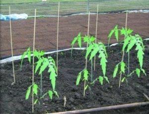 Композитные опоры для растений